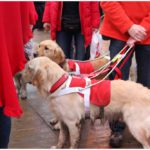 golden retriever op domein puyenbroeck
