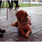 blindengeleidehond op de warmste week