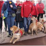 4 golden retrievers op de warmst week