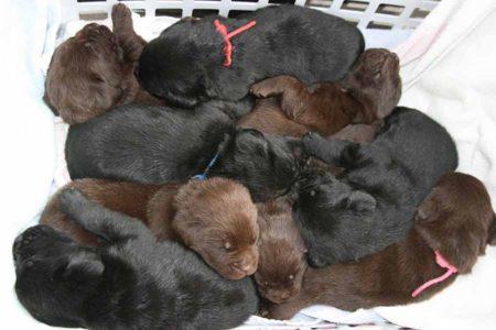 Een wasmand vol met pups