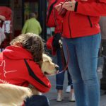 Instructeur geeft golden retriever Poppy een knuffel