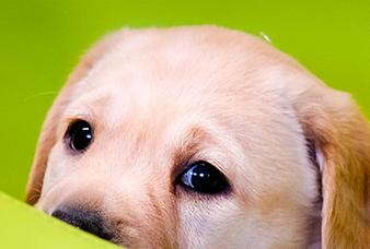 Puppy met een smekende blik