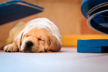 Puppy slaapt op de vloer