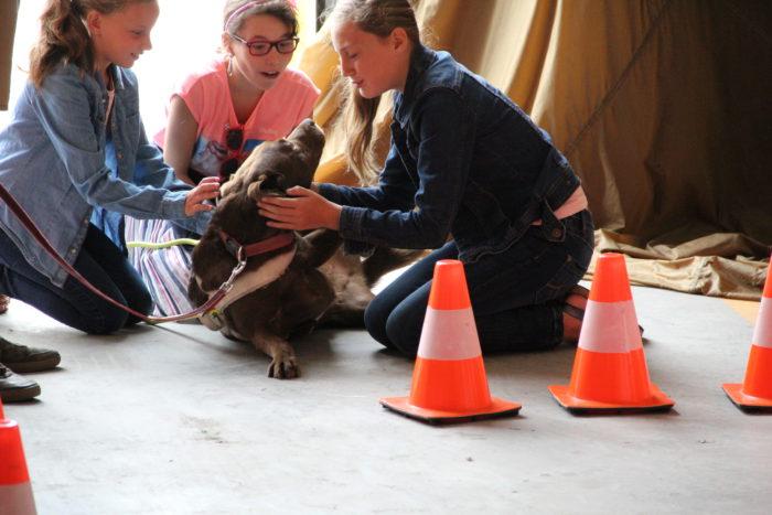 Blindengeleidehond wordt vertroeteld tijdens haar rust