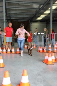 Blindengeleidehond die een parkour aflegt