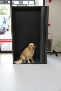 Hond in een kast