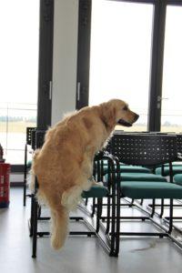 hond op een stoel