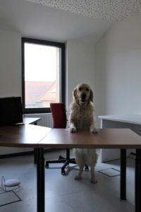 Hond die aan een bureautafel zit