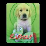 Golden retriever pup Rudolf